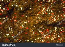 Red And White Led Christmas Tree Lights Close Countless Red White Led Christmas Stock Photo Edit