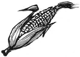 食べ物のイラスト野菜 夏野菜 水墨画 トウモロコシの画像素材
