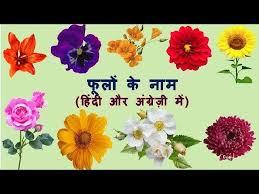 flowers name in hindi english
