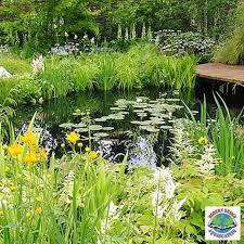 7 aquatic plants for small ponds