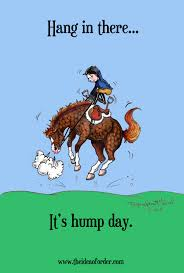 The Idea Of Order Happy Hump Day Horse Nation