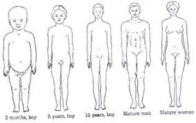 Human Proportions Chart The Physical Growth And Change That Occurs In Children