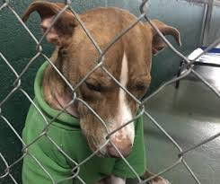 animal shelters sad. Contemporary Sad Bobby A Terrier Mix Had Been Dropped Off At Florida Shelter Week  Before Christmas And Animal Shelters Sad