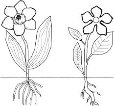 Small Picture Monocot Dicot Coloring