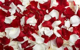 Rose Petals Desktop Wallpapers FREE on ...