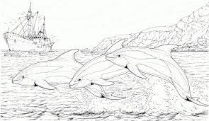 Small Picture Get This Dolphin Coloring Pages Free to Print 93614