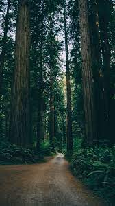 Iphone Forest Road Wallpaper Hd