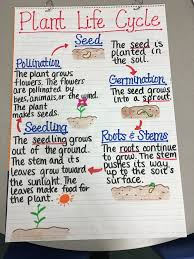 plant life cycle anchor chart