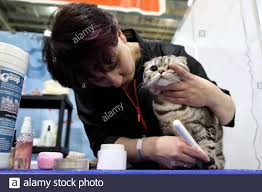 Russia. 07th Mar, 2020. MOSCOW REGION, RUSSIA - MARCH 7, 2020: A cat on  display at the