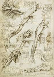 The Nature Of The Human Body Leonardo Da Vinci Medium