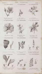Botanical Chart Print Botanical Chart Style With A Canvas Print Photowall