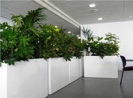 modern indoor planters  marissa kay home ideas  top indoor