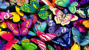 Butterfly Laptop Wallpapers - Top Free ...