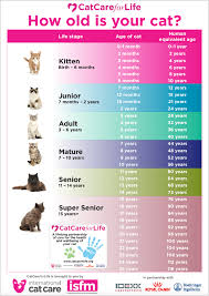 Dog Years Conversion Chart How To Tell Your Cats Age In Human Years International