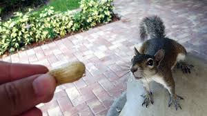The Great Squirrel Debate: To Feed or Not to Feed? | HowStuffWorks