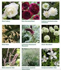 jo whiley scent garden plant list