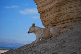 Ο σκύλος του Μίνωα...