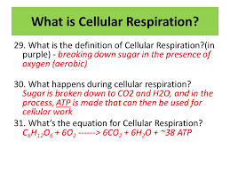 sd dating objectives describe the similarities and differences between photosynthesis and cell respiration