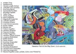 Oahu Fish Chart Hawaiian Fish Id Chart Fine Art Of Lucy Arnold