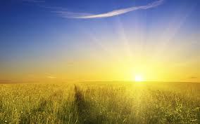 grass field sunrise. Modren Sunrise Grass Field Sunrise Pictures On 7Themescom