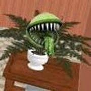 play carnivorous challenge game