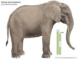 Elephant Description Habitat Scientific Names Weight