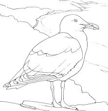 Coloriage Oiseau De Mer Go Land Argent