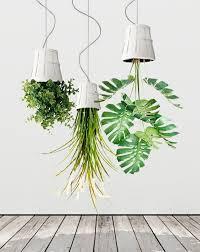 hanging plants upside down decoration ideas houseplants determine