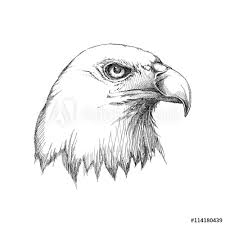 bald eagle template vector sketch of bald eagle head profile in black isolated on white