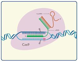 Crispr Cas9 Guide Rna Design Crispr Genome Editing 5 Considerations For Target Site