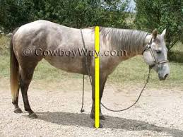 Measure Horse Height