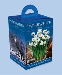 Paper White Flower Bulb Paperwhite Gift Boxes Paperwhites Flower Bulb Index