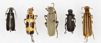The Most Common Texas Insect Identification Tools