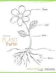 Small Picture Best 25 Plant parts ideas on Pinterest Teaching plants Parts