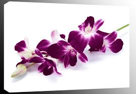 extra large plum purple orchids on white box canvas floral wall art picture 4ft ebay on purple orchid wall art with extra large plum purple orchids on white box canvas floral wall art