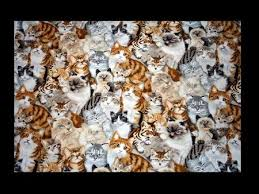 hundreds of cats.  Cats Millions And Of Cats Fight Back  Abstract Collage Cats Hundreds Intended Hundreds Of A