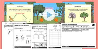 Animal Flow Chart Ks2 Year Classification Keys Powerpoint Task Setter Activity Pack