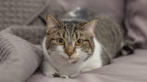 low protein cat food. What Low-Protein Really Means In Cat Food Low Protein