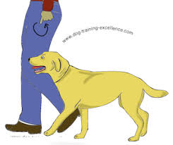 Dog Training Hand Signals Chart Pdf Dog Training Hand Signals A Picture Instructional Guide