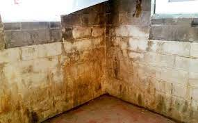 11 tips to get rid of basement mold