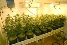 basement grow room design. The Theme Is Okay, Although Not Terribly Sparkly. GROW LIGHT Kinda Of Cool. Makes Me Think Illicit Plants Being Grown In A Locked Room Basement. Basement Grow Design S