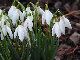 День проліска — відзначається 19 квітня