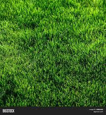 green grass soccer field. Exellent Field Green Grass Texture From A Soccer Field In Grass Soccer Field S