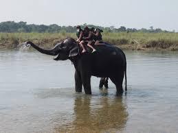 """Résultat de recherche d'images pour """"gif éléphanteau"""""""