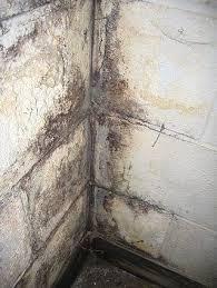 clean mold off basement concrete walls