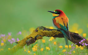 spring animal wallpaper. spring animal wallpaper #g5k
