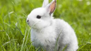 sweet rabbit hd photo cute