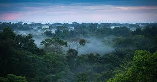 amazon rainforest. Interesting Rainforest The Amazon Rainforest   Brazilian Things For Rainforest