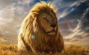 Big Lion Face HD Wallpaper Download ...