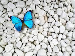 Blue Butterfly Wallpaper HD [2560x1920 ...